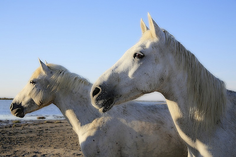 Protect Our Wild Horses